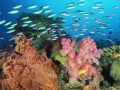 workroom:zm5:coral_landscape_with_soft_corals_and_fish_fiji.jpg